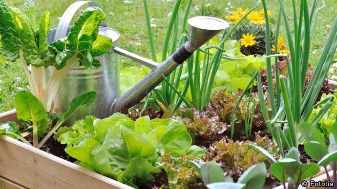 【栽培のコツ】ピーマンの育て方|家庭菜園図鑑