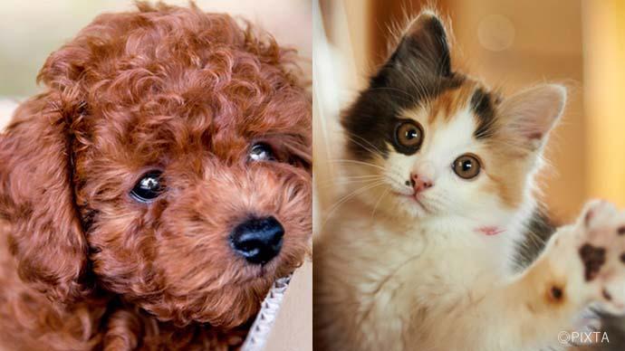 愛犬&愛猫のヘルスケア|快適で健康的な暮らしのための環境づくり。