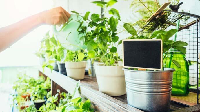 種類別!初心者向きの観葉植物5選 育て方ガイド