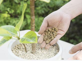 【グリーンのある暮らし】観葉植物の植え替え方法|プロ監修