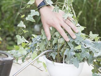 暮らし上手さんは知っている!観葉植物の正しい水やり方法