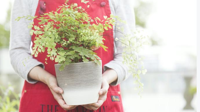 意外と知らない?観葉植物の枯れる原因8つ【プロ監修】