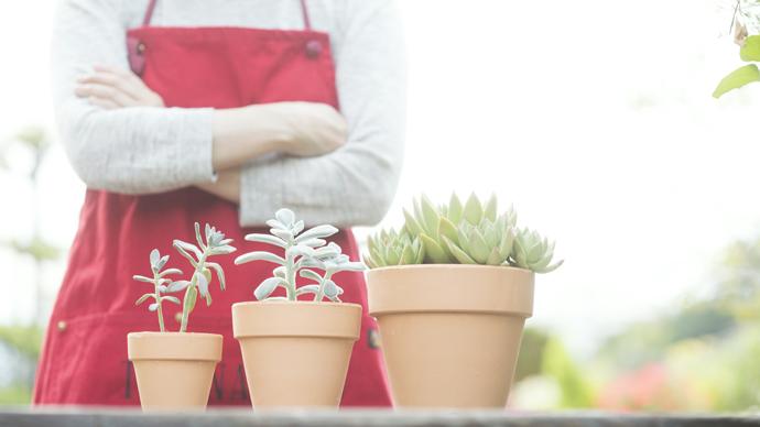 【完全保存版】植物の育て方ガイド|植木鉢・サイズの選び方編