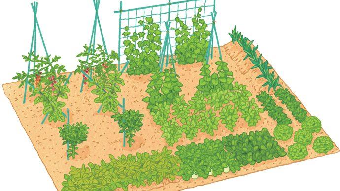 家庭菜園好き必見!美味しい野菜づくりのコツとは