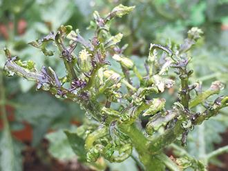 【失敗しない】家庭菜園で収穫量を増やすために気をつけること
