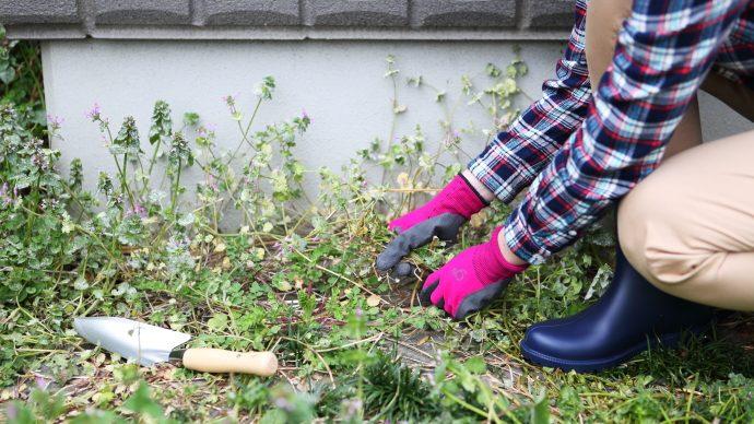 雑草対策!草むしりを超ラクにするコツ【プロ監修】| Pacoma パコマ | 暮らしの冒険Webマガジン