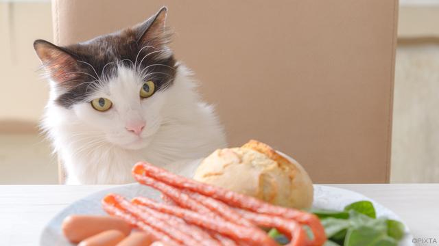 危険!猫に与えてはいけないNG食べ物【獣医監修】