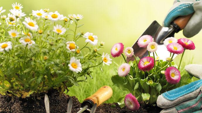 ガーデニング初心者必見!花に囲まれる自慢の庭の作り方
