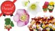 【Pacoma 10月号】花と野菜の苗Present